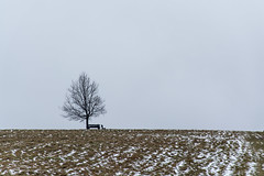 A Bakony a mi Bakonyunk / Foggy Hungary (-REcallable-Memories-of-ET-) Tags: 2016 eszetamás hungary nikon places d5200 bakony köd fog winter tél grey tree forest parizs ady fa landscape minimal line europe et