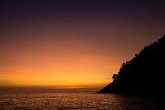 Despertar (wesleybisetto) Tags: light sea brazil sky orange sun beach nature water birds brasil gold natural natureza ceu amanhecer goldenlight
