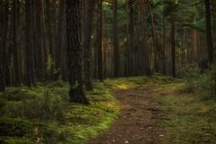 Path through the woods (dannicamra) Tags: tree nature forest germany landscape bayern bavaria woods nikon landschaft wald baum weg pfad regenstauf d5100
