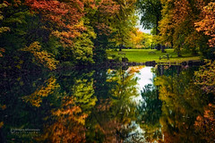 Sound of Silence (Dragan Milovanovic photography) Tags: autumn sky lake plant canada reflection nature water colors mirror landscapes scenery mood quiet quebec outdoor montreal foliage silence serene relaxation sounds waterscape parcjeandrapeau lightfall draganmilovanovicphotography