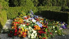 57/365 Flowers