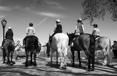 Horses by Reservoir I _ bw (Joe Josephs: 2,650,890 views - thank you) Tags: nyc newyorkcity travel horses horse animals centralpark manhattan streetphotography photojournalism centralparknewyork urbanlandscapes travelphotography urbanparks urbannewyorkcity joejosephs joejosephsphotography