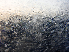 (StrongGrace Photography) Tags: windows winter cold texture ice glass frost fenster eis eisblumen filigree frostpattern filigran elbtalaue dannenbergelbe