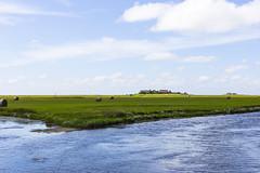 Sommer auf der Hallig 2015a (Rolf Piepenbring) Tags: summer northsea summertime nordsee holm hallig hallighooge