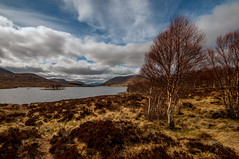 Wild and free (cheese and pickle) Tags: uk blue trees light cloud lake color colour tree beautiful beauty clouds season landscape island scotland spring scenery unitedkingdom britain scenic atmosphere isolate scottishhighlands