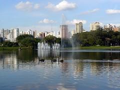 Ibirapuera Park (Serghei Zadorojnai) Tags: park brazil lake fountain swan saopaulo 2012 ibirapuerapark 201204 20120414
