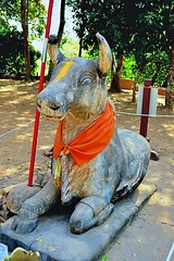 Phnom Bakheng - Nandi, the mount of  Shiva sits at the base of the temple (Simon5591) Tags: khmer angkorwat siemreap phnombakheng
