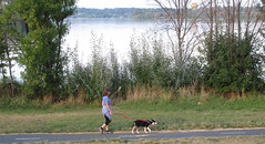 Walking a dog beside the lake (spelio) Tags: water festival mar hotair balloon australia canberra act 2016 lakeburleygriffin
