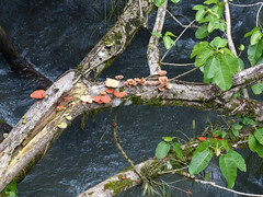 Fungi1 (sharpbob2) Tags: tree water argentina fungi iguazu iguassu