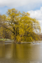 Riverside Park Flood 2016-2.jpg (scorpio71gr) Tags: unitedstates michigan grandrapids