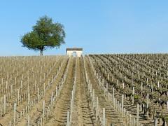 """Cabane (Daniel Biays """" VOIR MON PROFIL """") Tags: landscape paysage vignes vignoble arbre cabane gironde mdoc saintseurindecadourne"""