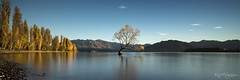 That tree. (kaioyang) Tags: newzealand zeiss mt sony lakewanaka thelonetree a7r2 loxia2821
