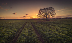 Tree & Tracks (Iain Brooks) Tags: old sunset tree field sunrise landscape scotland highlands nikon aberdeenshire country scottish lone iain 20 rayne brooks d610 18g