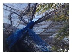 (adele di nunzio) Tags: ronald knots veli laing overlays veils nodi ronaldlaing