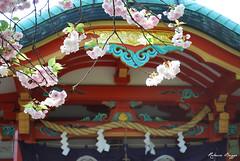 Spring in Japan (DameBoudicca) Tags: pink flower fleur rose japan tokyo shrine blossom flor rosa  cherryblossom  sakura blomma nippon  shiba shinto fiore blte  japon giappone nihon tokio schrein toshogu japn sanctuaire tokugawa kirschblte    jing fleursdecerisier tokugawaieyasu   japanischekirschblte  tshg  helgedom krsbrsblomma fiorediciliegio flordelcerezo shibatoshogu shibatshg