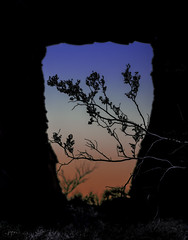 DSC_6305-EditFAA (john.cote58) Tags: statepark blue sunset cactus sky mountains art valleyoffire nature silhouette rock stone landscape outside outdoors design ancient day branch dusk nevada cave geography bushes dinosaurs fossils baron mojavedesert moapavalley