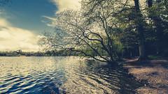 Heath Pond (EugeneKup) Tags: uk england sky tree nature water clouds outdoor soil petersfield splittone heathpond