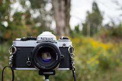 Dependable (e.m.alder) Tags: camera nikon bokeh depthoffield fe nikkor 50mmf18d nikonfe nikon50mmf18d nikkor50mm118d d7100 1855mmf3556gvr