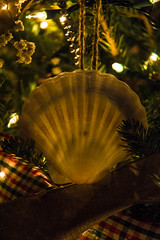 DSC_0535.jpg (craigdrezek9) Tags: christmas tree nikon shell christmastree ornament seashell nikkor scallop 1870 d7100