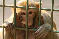 Prison Life - VIII (Rafee Mizan Khan Chowdhury Niloy) Tags: people nature canon garden botanical zoo wildlife photowalk dhaka mirpur 70d
