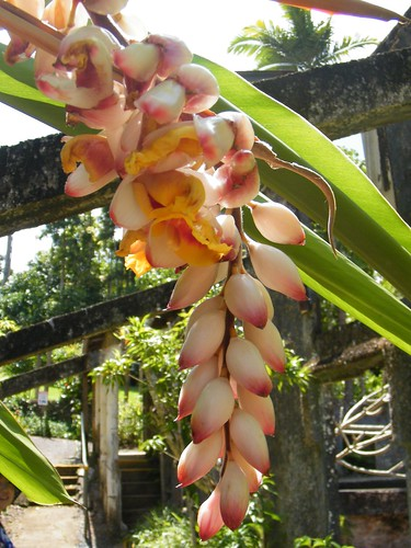 Orchid Hanging