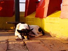 """Who you're dreaming of?"" (Lívia.Monteiro) Tags: chile santiago red dog yellow sleep dream cachorro dormindo cerrodesantalucia"