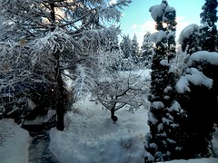 The View from My Home Office (Pictoscribe) Tags: winter january 20 2016 pictoscribe