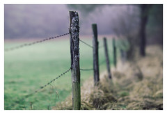 Handmade (memories-in-motion) Tags: nature rural canon fence happy iso100 mood bokeh outdoor handmade linie border meadow wiese 85mm eifel line pole sharp f16 barb zaun holz spitz borderline stacheldraht grenze hff pfosten barbwirefence flechten vulkaneifel stechen stacheldrahtzaun 11600sec ef85mmf12liiusm eifelsteig 5dmarkiii