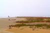 Cold Winter Day (West Beach Sunset) Tags: winter beach gulfofmexico water canon eos sand texas january overcast sanddunes gulfcoast coldday brazoriacounty cd040 texasbeaches coastalphotos eosrebelt1i vegitationline