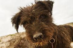 Muky (Zsuzsa Poór) Tags: ocean dog pet water animal island fuerteventura canarias atlanticocean mascota 2470l islascanarias canaryisland airelibre coth canonef2470mmf28 canonistas canoneos7d muky coth5