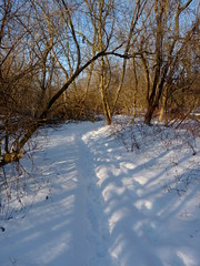Snowy trail (Dendroica cerulea) Tags: trees winter snow forest newjersey path nj trail highlandpark middlesexcounty highlandparkmeadows