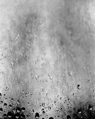 Through The Weeping Glass # 5 (SopheNic (DavidSenaPhoto)) Tags: trees blackandwhite bw film monochrome rain iso400 35mmfilm hp5 ilford 50mmf18 selfdeveloped id1111 canonelan7e