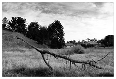Fallen Tree (mhocter) Tags: blackandwhite bw tree canon eos fallen canoneos ef fallentree canonef ef247028l canonef247028l canoneos5dmarkii 5dmarkii 5d2 canon5dmarkii