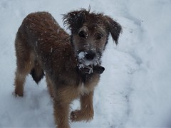 Tess in the snow