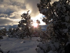 Not All Sunny and Warm in Arizona (zoniedude1) Tags: winter light sunset shadow arizona snow cold southwest tree nature forest outdoors afternoon snowy grandcanyon adventure exploration discovery southrim snowcovered winterstorm snowytrees sunflare pineforest pinyon grandcanyonnationalpark stormyskies gcnp pinyonpine pinusedulis outinthewild zoniedude1 pionpine earthnaturelife canonpowershotg12 notallsunnyandwarminarizona southrimwinter2016 winterontheedge 7130ftelevation