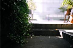 Afternoon (yasu19_67) Tags: shadow sunlight film japan analog bokeh atmosphere step osaka 40mm expiredfilm photooftheday filmphotography konicaminoltacenturia200 filmism yashicaelectro35glcoloryashinondx40mm17