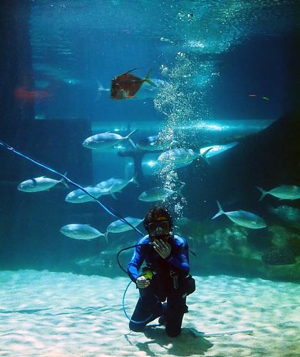 Greater Cleveland Aquarium 01-22-2015 - Shark Tank Diver 1