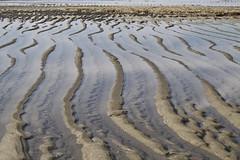 Backbone (brucetopher) Tags: ocean sea beach water sand pattern flat patterns tide flats tidal dandy waveaction oceanfloor