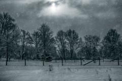 More-Snow (desouto) Tags: trees sky snow storm nature landscape hdr