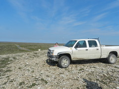Going swimming at Long Point August 2015 08 (cambridgebayweather) Tags: swimming nunavut cambridgebay arcticocean