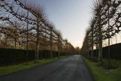 Winter sunrise scene - Dordrecht 2015 (Wilma v H- thanks 4 U'r lovely comments/faves!) Tags: trees sunrise dawn shadows dordrecht platanusacerifolia platanen winterscenics begraafplaatsdeessenhof essenhofcemetery