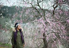 Ume no Sato (Nazra Zahri) Tags: japan spring nikon raw hanami okayama tsuyama 梅 plumblossoms 梅の花 花見 2016 しだれ d700 枝垂れ梅
