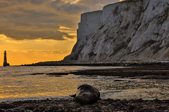 Resting On The Rocks (Ashley Hemsley) Tags: ocean camera uk trip sleeping sunset sea england orange lighthouse white seascape reflection nature water colors beauty rock clouds canon skyscape landscape sussex marine waterfront view walk wildlife united horizon low kingdom visit scene location cliffs east explore reflect pools seal eastbourne 5d rest coastline serene resting seafront hdr tides