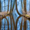 River of Reflections 2 1080 (larsvandegoor.com) Tags: