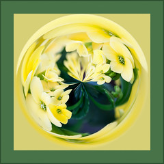 Shades of Spring (lclower19) Tags: flower green yellow square flora colorful pastel orb odt atsh promptaddicts supercalafragilisticexpialidocious