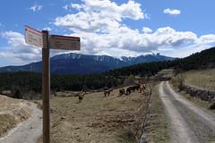 Pireneje 2012 - wschód