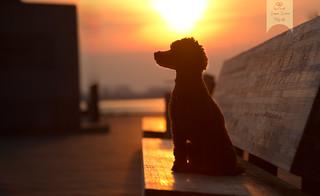 Anton im Sonnenuntergang