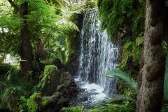 Madeira Monte Botanical Garden (michaelbeyer_hh) Tags: madeira