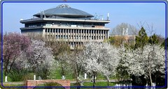 Spring at University Politehnica of Bucharest (Ioan BACIVAROV Photography) Tags: flowers trees panorama flower tree spring university bucharest politehnica universitypolitehnicaofbucharest