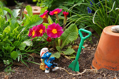 Schlumpf Tourist (ingrid eulenfan) Tags: toy photographer blumen tourist smurf smurfs garten kamera schlumpf blumentopf traveler erde spaten primel schleich gartenidylle smallfigure smurfis